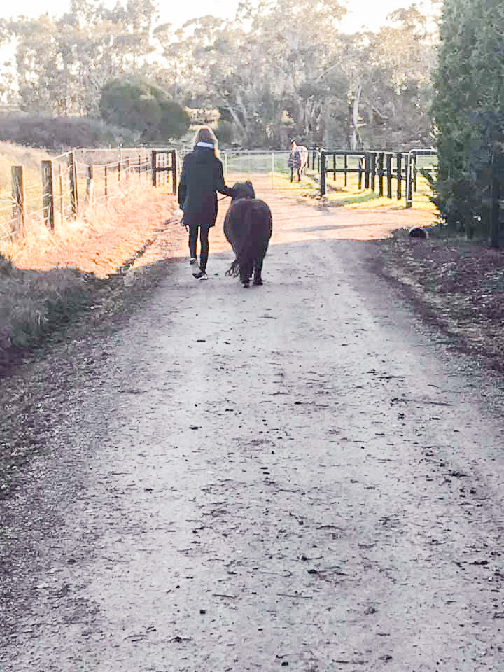 A person leading a pony