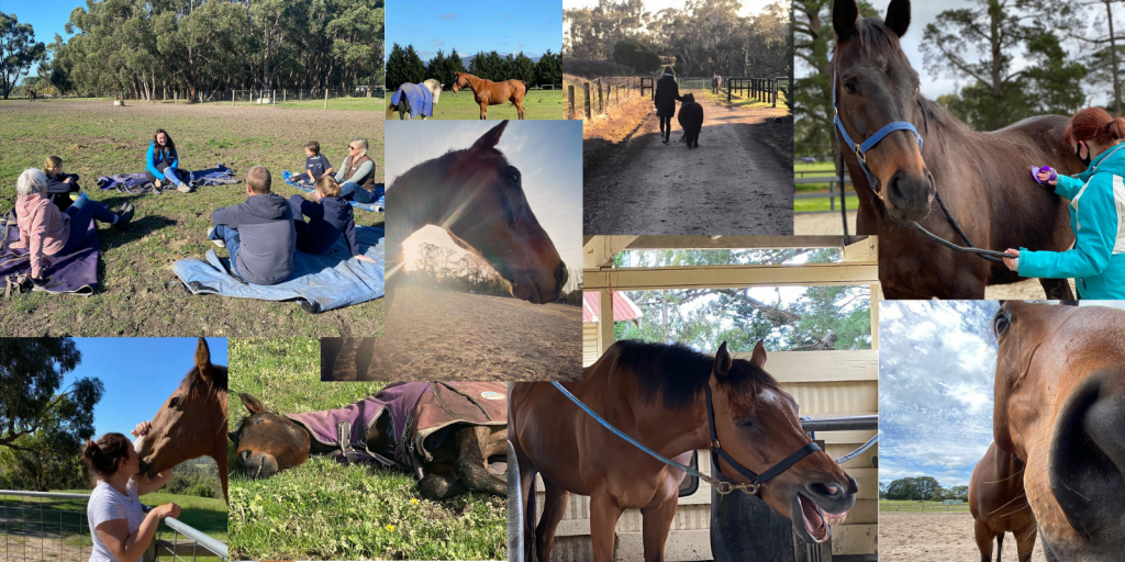 Collage of various Equine Assisted Therapy activities
