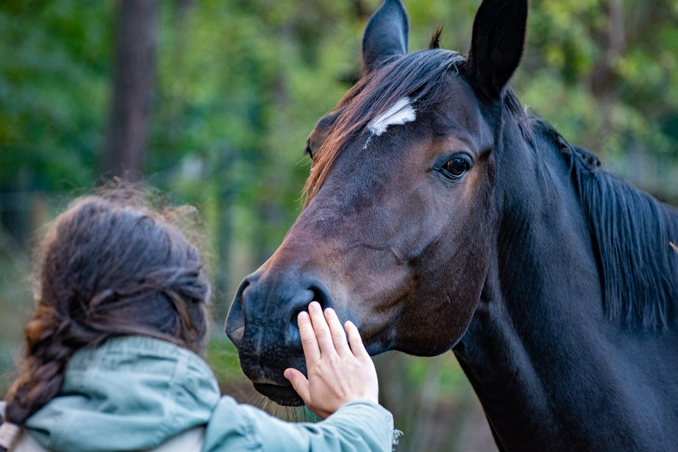 Person petting a horse