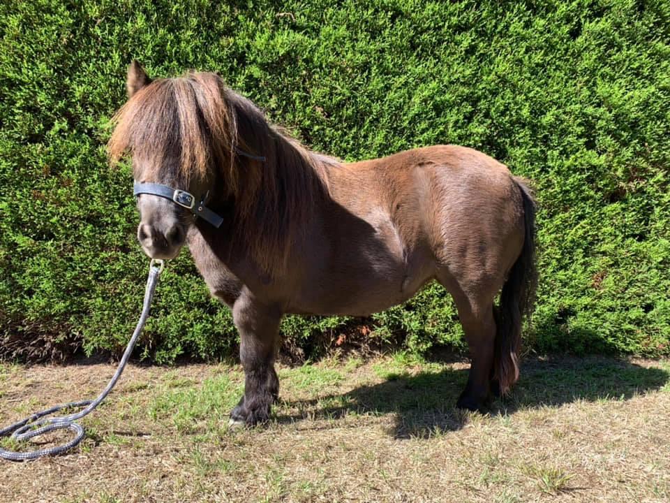 Frankie the pony
