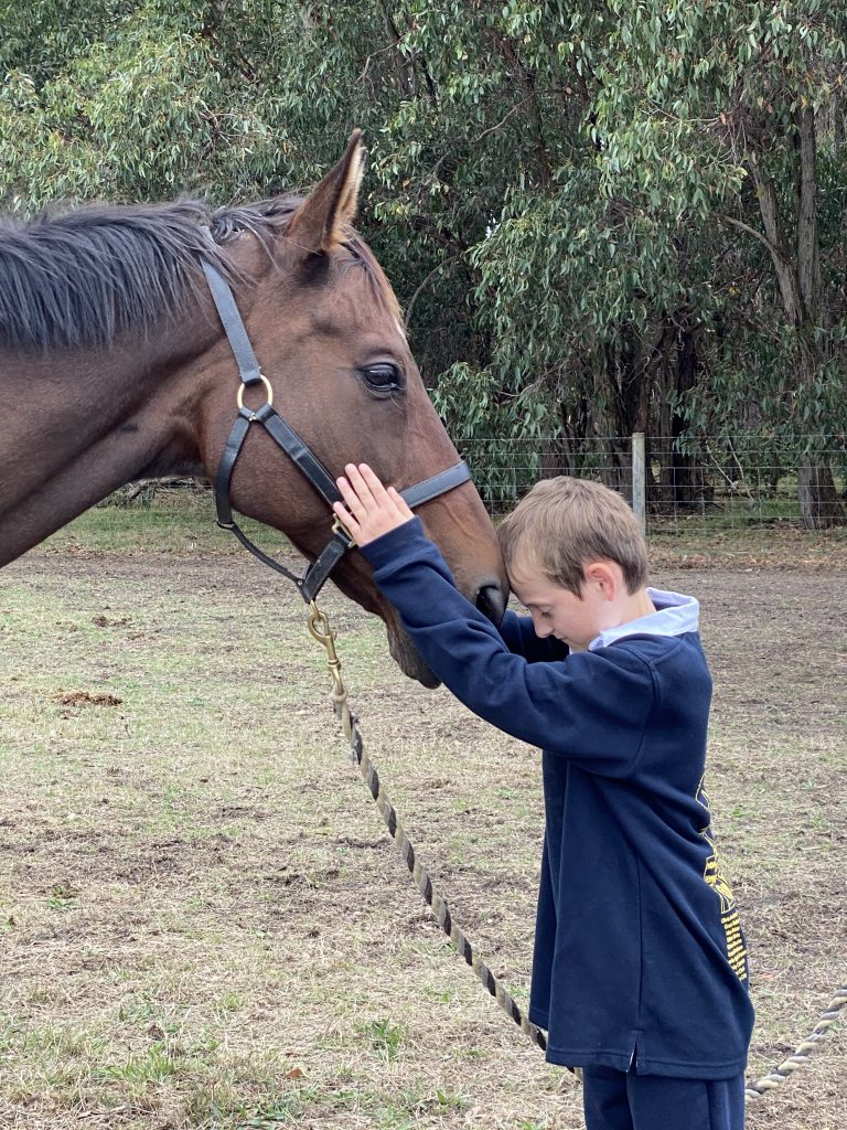 Poh the horse with a young boy