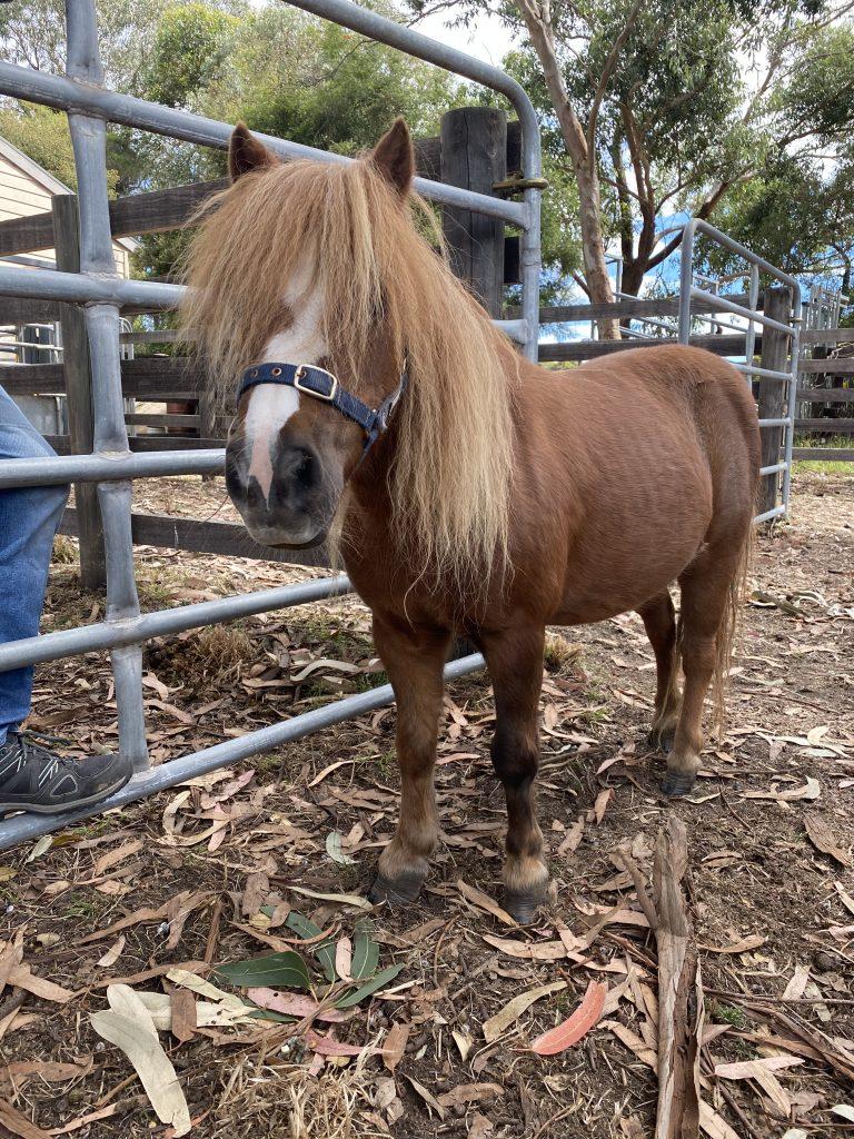 Suzie the pony