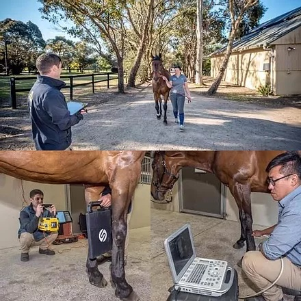 Vet checking a horse
